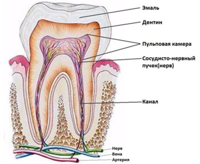 Как удалить нерв зуба в домашних условиях